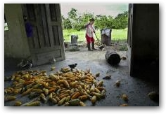 Maria Villasis sweeps in front of her barn on her farm near Guanta oil well #8  -> Click to enlarge